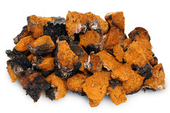 Chaga - birch mushroom Royalty Free Stock Photo