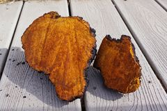Chaga Mushroom Chunks drying on the porch. Upstate New York 2018 Stock Photography