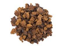 Chaga Mushroom Royalty Free Stock Image