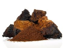 Chaga Mushroom - Healthy Nutrition stock photos
