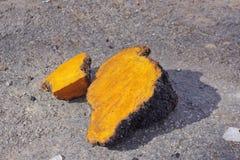 Chaga-Pilz-Klumpen, die draußen trocknen Lizenzfreie Stockfotografie
