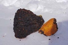Chaga-Pilz-Klumpen, die im Schnee trocknen Stockbilder