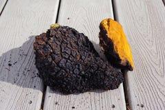 Chaga-Pilzklumpen, die auf dem Portal trocknen Stockfotos