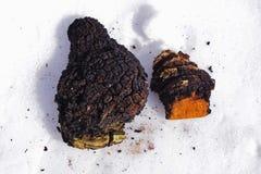 Chaga-Pilzklumpen, die auf dem Schnee liegen Stockfotos