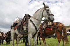 Chagra-Pony Lizenzfreies Stockfoto