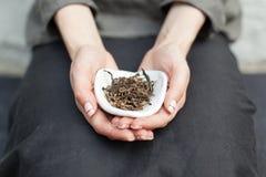 Chahe con el té negro para el té chino que bebe en las manos del amo Ceremonia de consumición del té del chino tradicional imagen de archivo