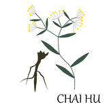 Chai hu herb Royalty Free Stock Photos