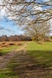 Chailey Gemeenschappelijk Landschap royalty-vrije stock afbeelding
