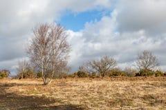 Chailey Gemeenschappelijk Landschap royalty-vrije stock afbeeldingen