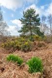 Chailey Gemeenschappelijk Landschap stock afbeeldingen