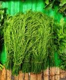 Chaim ou vegetal tailandês local fotografia de stock royalty free