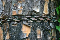 Chain Around Tree Stock Photos