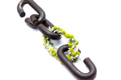 A chain is only as strong as its weakest link. Proverb one link made of flowers Royalty Free Stock Photography