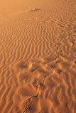 The chain of bird footprints Royalty Free Stock Photos
