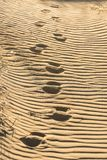 Deep tracks on grooved sand. Chain of deep tracks on grooved sand Stock Photography