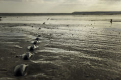 Chain embedded in wet sand on beach at low tide Stock Photography