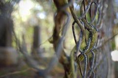 chain fence link στοκ φωτογραφία με δικαίωμα ελεύθερης χρήσης