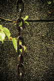 Chain and leaves on wall Stock Images