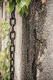 Chain and leaves on wall Royalty Free Stock Photos