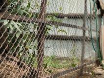 CHAIN-LINK篱芭彩色照片  免版税库存照片