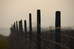 Chain-link fence Stock Image