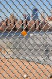 Urban Chain Link Closeup Abstract Texture Background. Chain link fence closeup abstract texture background with urban city skyline background Royalty Free Stock Image