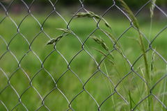 Chain-link fence. Deatil on chain-link fence with meadow plants Royalty Free Stock Image