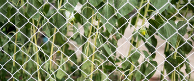 Chain link fence in front of trees. White color Stock Images