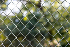 Chain link fence tree background Stock Photography