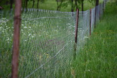 Chain-link fence between two gardens. Metal chain-link fence divinding two green blossoming gardens Stock Image