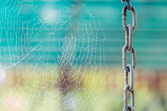 Chain and Morning dew. Shining water drops on spiderweb Stock Photos
