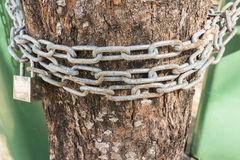 Chain and  padlock for Prevent people cut timber , Save tree Con Royalty Free Stock Photography