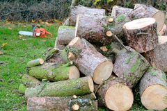Chain saw and logs Stock Images