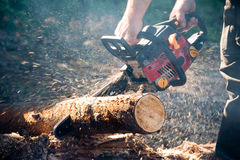 Chain saw. Man work with chain saw in the forest Royalty Free Stock Photo