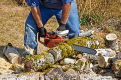 Chain Sawing Poplar Logs. A man is using an orange chainsaw to cut smaller moss covered poplar tree branches lying on the ground Royalty Free Stock Photos
