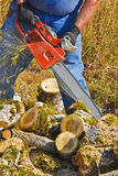 Chain Sawing Poplar Small Logs. A man is using an orange chainsaw to cut smaller moss covered poplar tree branches lying on the ground Stock Photo