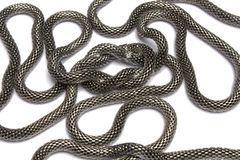 Chain the snake. With unit on a white background it is isolated Stock Photos