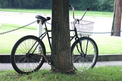 Chained bike. Bike chained to a tree Royalty Free Stock Photography