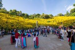 Chaing Rai 泰国 11月19日, Tithonia diversifolia在山的花田和参观的很多人民 免版税图库摄影