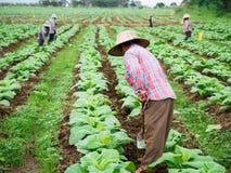 Chaingrai - 11月29 :未认出的工作者铲起土壤 免版税图库摄影
