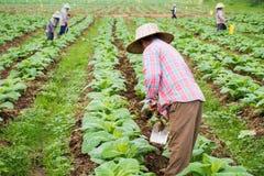 Chaingrai - 11月29 :未认出的工作者铲起土壤 库存照片
