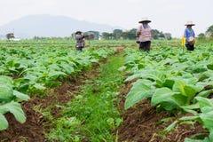 Chaingrai - 11月29 :未认出的工作者铲起土壤 图库摄影