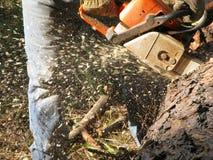 chainsaw действия Стоковые Изображения RF