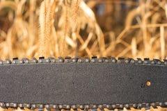 chainsaw лезвия Стоковое Изображение RF