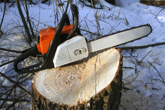 Chainsaw. Stub after cutting a tree by means of a chainsaw stock photo