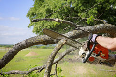chainsaw fotos de stock royalty free