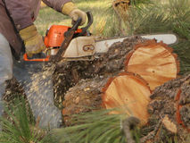 Chainsaw Action Stock Photo