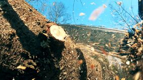 Chainsaw is being used to start cutting timber
