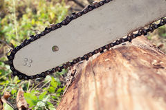Chainsaw blade cutting log of wood Stock Image