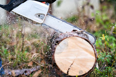 Chainsaw blade cutting log of wood Royalty Free Stock Photography